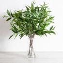 Eucalyptus-Branch-Stem-by-M.U.S.E Sale