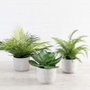 Regent-Potted-Plant-by-M.U.S.E Sale