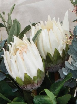 Protea-Stem-by-M.U.S.E on sale