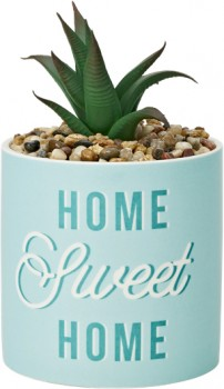 Mothers-Day-Plant on sale