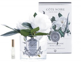 Cte-Noire-Gardenia-Double-Flower-14cm on sale