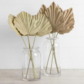 Dried-Fan-Palm-Stem-by-M.U.S.E on sale